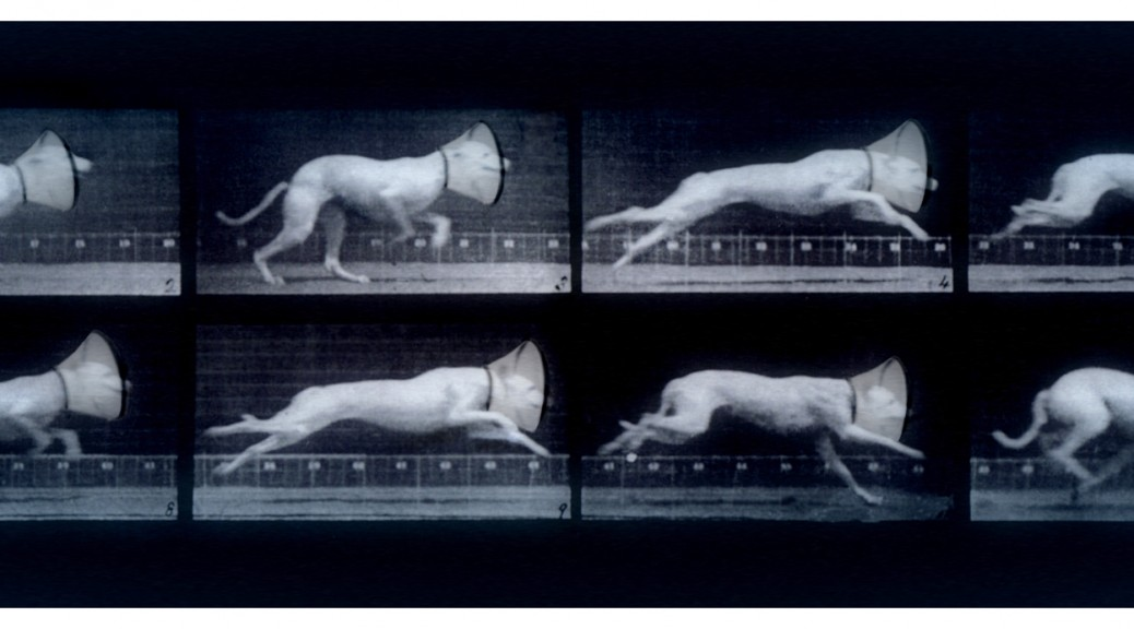 Canine Injury Motion Study (After Muybridge)